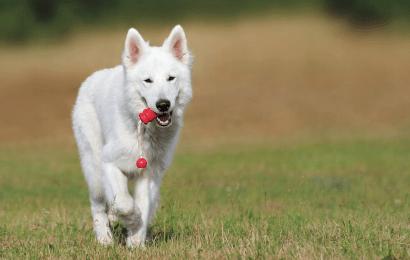 Trixie voor je hond aanschaffen