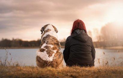 Leuke uitstapjes maken met je hond