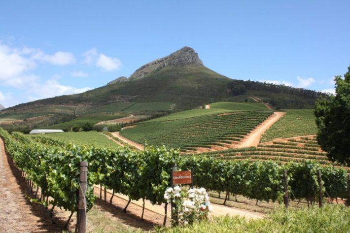 Mousserende wijn uit Zuid-Afrika: Cap Classique chardonnay
