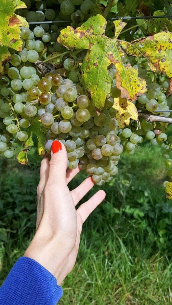 Belgische wijn proeven bij 3 Belgische wijndomeinen