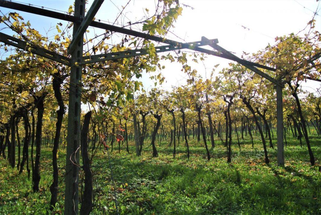 wijnreis naar Valpolicella: Pietro Zardini