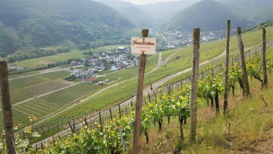 Pinot Noir wijn Spatburgunder Ahr