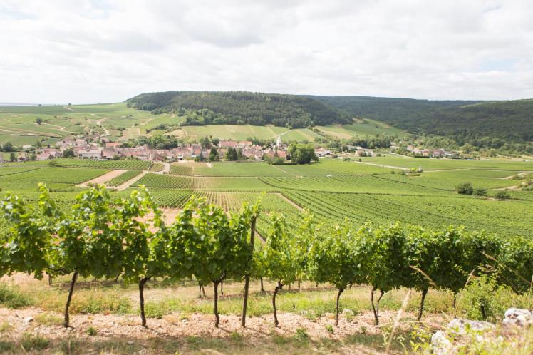 Wijngaarden op de côte de Beaune in Bourgogne