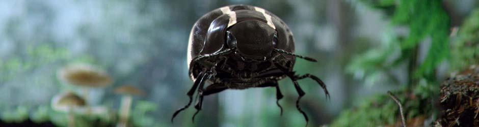 blackbeetle_ VOLKSWAGEN – BLACK BEETLE