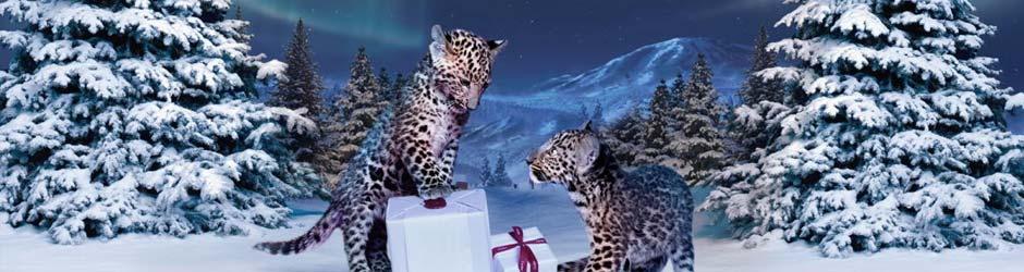 cartierWintertale_ CARTIER - Winter Tale 2012
