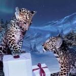 cartierWintertale_ CARTIER - Winter Tale 2012