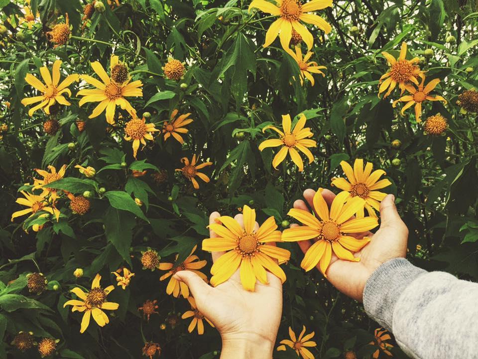 Ngắm hoa giữa trời thu