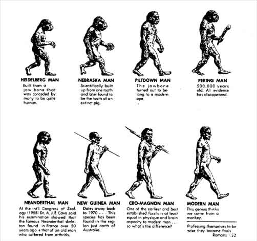 Darwin's Theory Of Evolution Discovery History Science