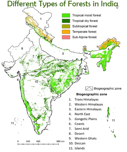 The miombo forests in africa, and the dry forests of central india and. Different Types Of Forests In India Types Of Forests Of India