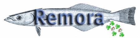 Remora, aka the suckerfish