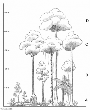 amazon rainforest layers diagram sql server cluster architecture adventist youth honors answer book nature rainforests pathfinder wiki draw a showing the vertical of plants in tropical label them