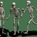 الهيكل العظمي