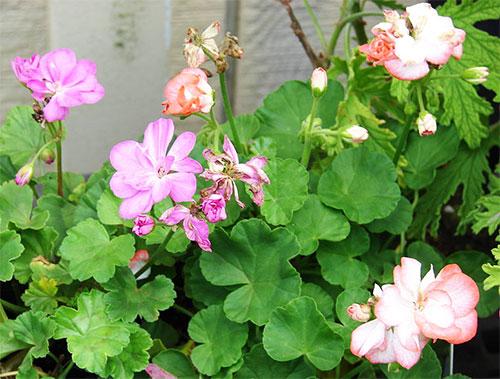 Фитонциды растений: характеристика и свойства. Фитонциды: основные источники и польза для здоровья человека