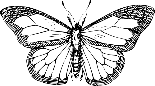 small resolution of butterfly black and white butterfly clipart black and white 10