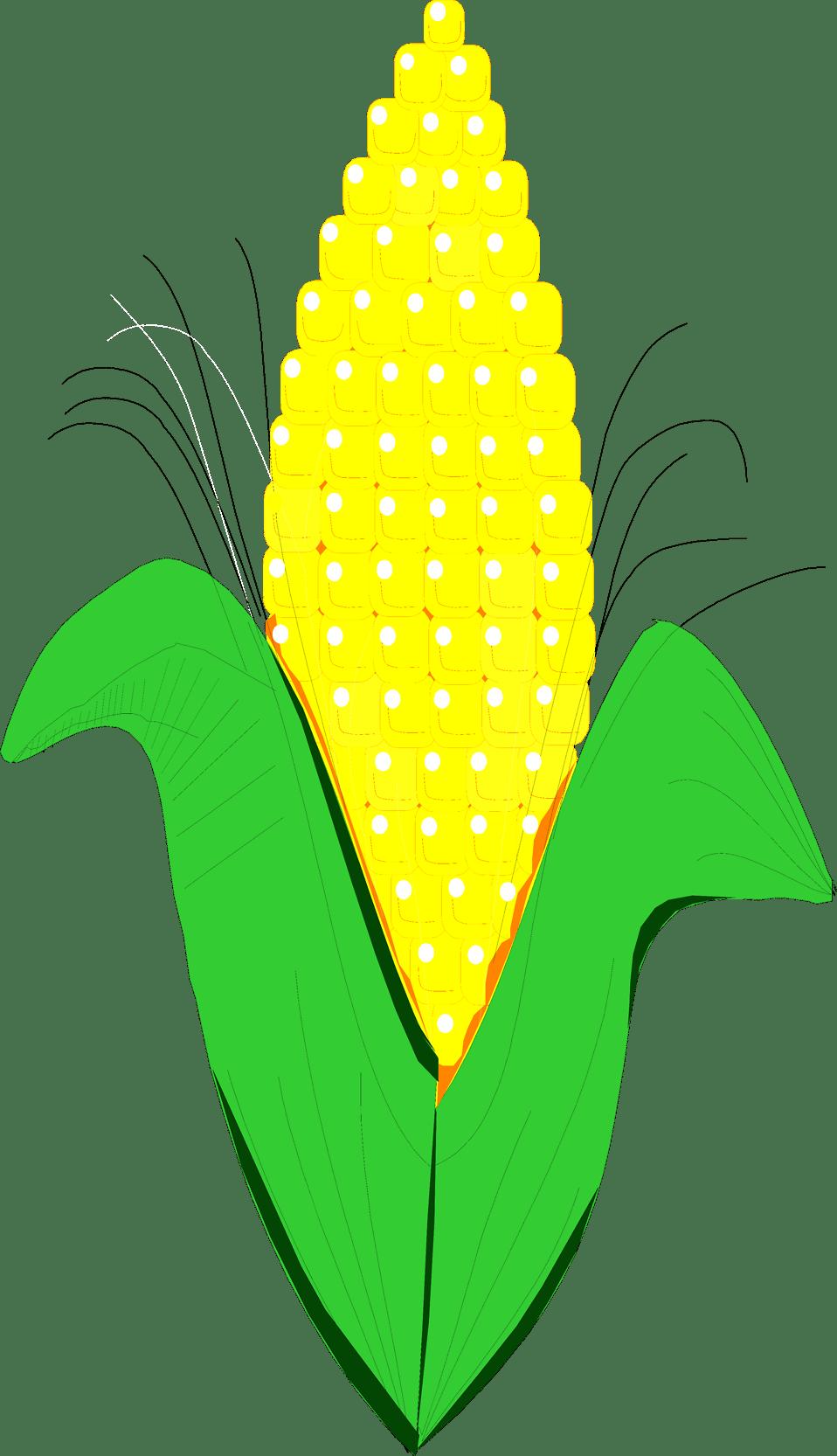 medium resolution of corn clip art 2 2