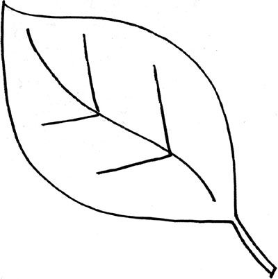 Simple leaf outline templates how to draw doodle clipart