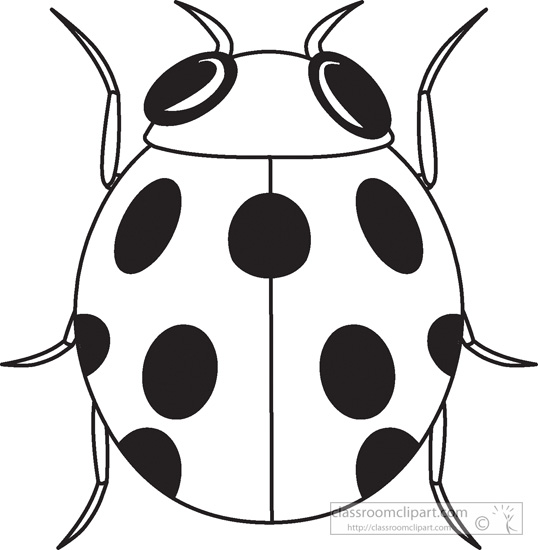 ladybug outline clipart - 56 cliparts