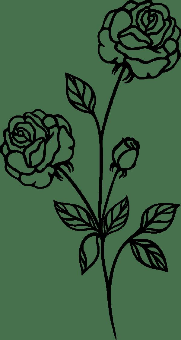 rose black and white flower