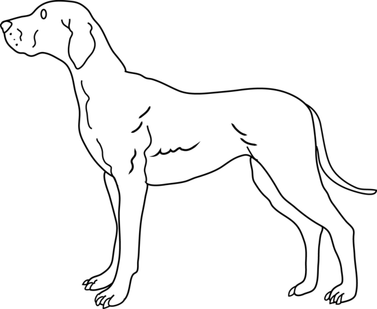 Dog Black And White Cute Black And White Dog Clipart
