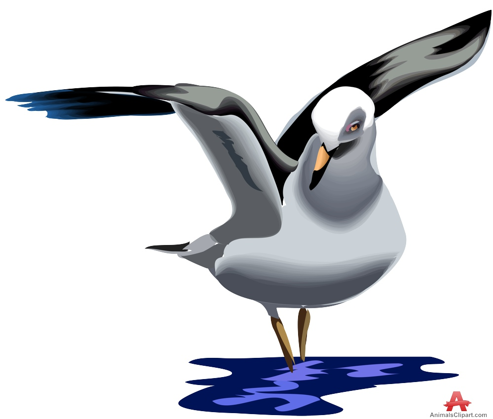 Seagull Clipart  59 cliparts