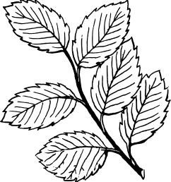 leaves clipart black and white [ 2555 x 2748 Pixel ]