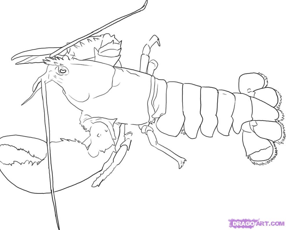 Lobster Tail Clipart
