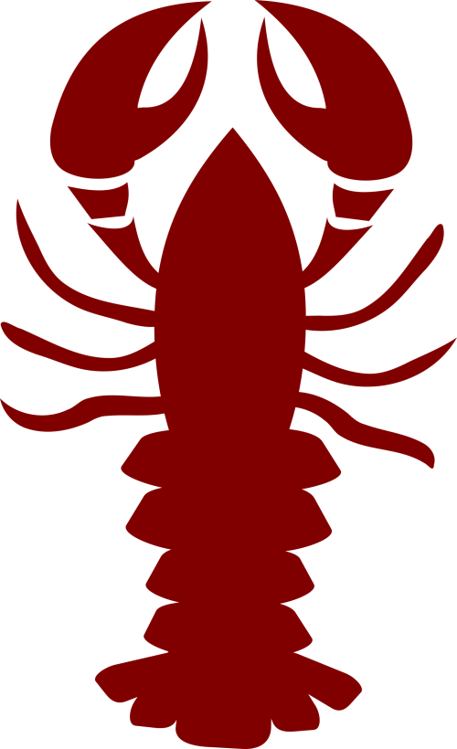 small resolution of lobster outline lobster pics clipart