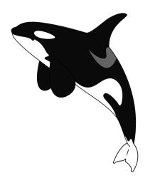 Orca Clipart 39 cliparts