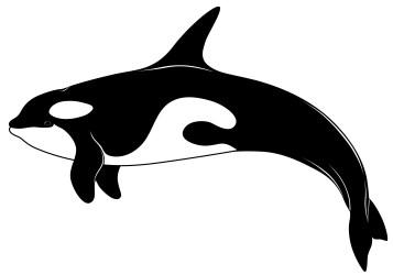Orca clip art 3 WikiClipArt