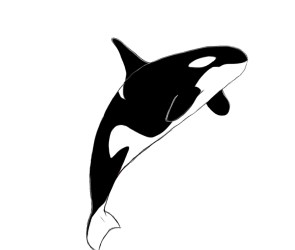 Orca killer whale clipart 2 WikiClipArt