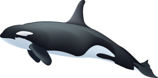 Orca killer whale clipart 3 WikiClipArt