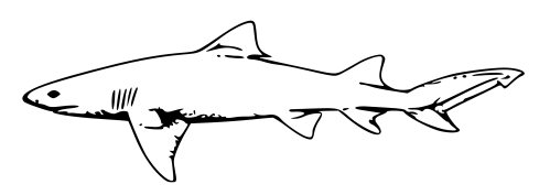 small resolution of shark black and white shark clip art black and white free clipart images