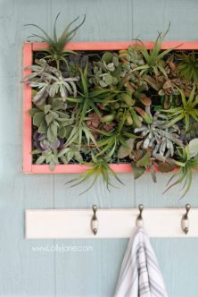 coral-vertical-succulent-garden-decor-2