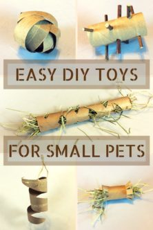 503-diy-toilet-paper-roll-toys-small-pets