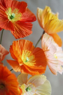 324-paper-icelandic-poppies