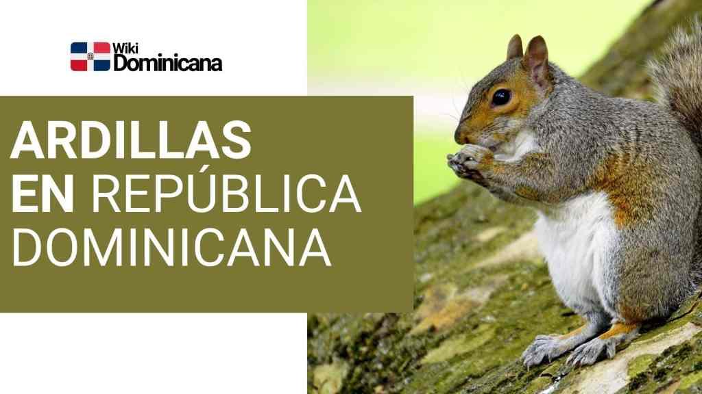 ardillas en República Dominicana