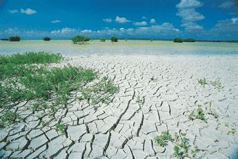 Flora y Fauna Laguna Rincon