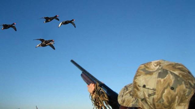 نصائح-لتحسين-صيد-البط