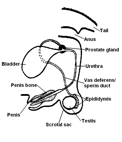 The Anatomy and Physiology of Animals/Test Yourselves/The