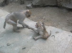 Biological AnthropologyUnit 2 Nonhuman PrimatesPrimate