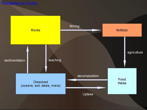 Diagram Of Nitrogen Biogeochemical Cycles Wikieducator