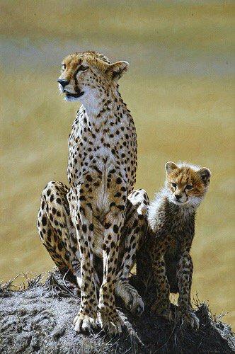 cheetah-mother-and-cub
