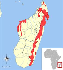Resultado de imagen de donde viven los aye-aye