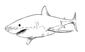 shark drawing draw step drawings animal sketchbook easy challenge sketchbooknation animals sea sharks sketches tutorials learn leopard steps sketch through