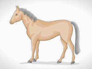 horse draw simple wikihow step