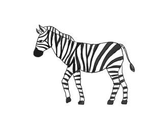 zebra draw step wikihow