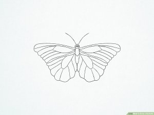 butterfly side drawing draw colorful pen ink step mermaid stippling