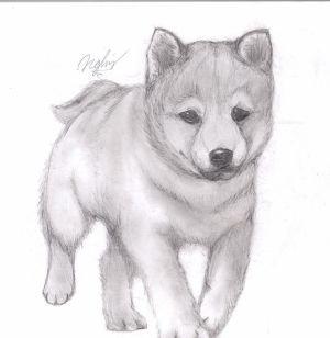 dog draw cartoon easy wikihow months uploaded ago ways