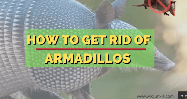 HOME REMEDIES TO GET RID OF ARMADILLOS