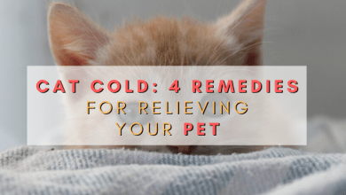 Photo of Cat Cold: 4 Remedies for Relieving Your Pet